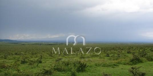 Nanyuki 1/4 acre plots